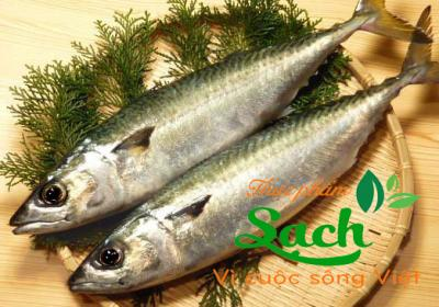 Cá nục hoa Nhật - saba sz 400-600g