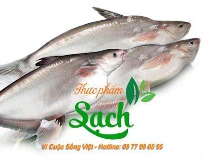 Giá cá Hú bao nhiêu 1kg 2021
