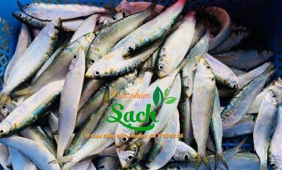 Mua bán Cá trích sỉ tphcm